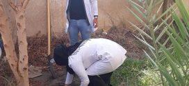كلية الزراعة تباشر حملة تشجير واسعه لمدارس متنوعة في محافظة المثنى